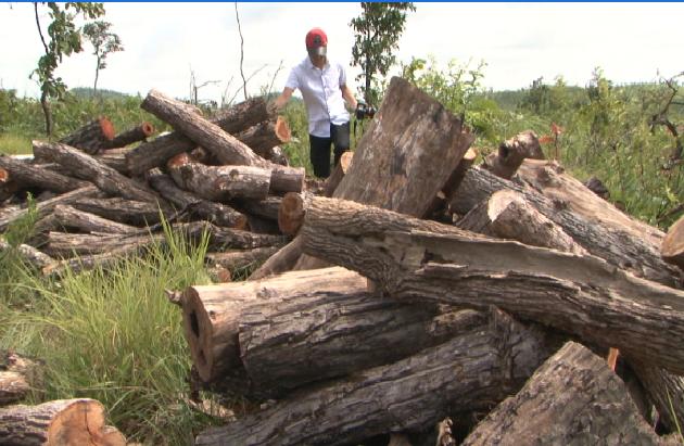 Đắk Lắk: Bắt nguyên giám đốc chặt phá gần 50 ha rừng trái phép
