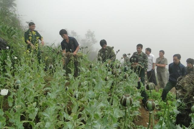 Bộ đội Biên phòng tỉnh Hà Giang chủ động đấu tranh phòng, chống tội phạm