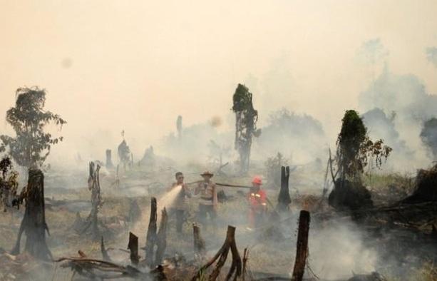 Cháy rừng làm suy giảm đáng kể diện tích rừng toàn cầu