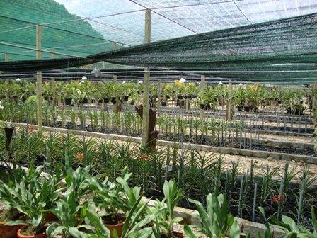 Bình Dương đẩy mạnh phát triển nông nghiệp đô thị, nông nghiệp kỹ thuật cao