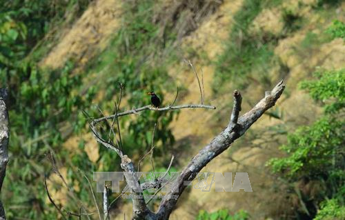 Phát hiện nhiều loài chim quý hiếm tại Khu bảo tồn thiên nhiên Xuân Liên, Thanh Hóa