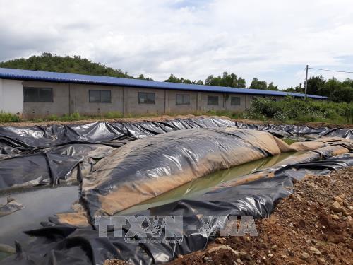 Ninh Thuận: Kiên quyết xử lý dứt điểm mùi hôi từ trang trại nuôi lợn