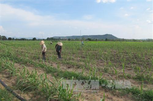 Nông dân Gia Lai hướng đến sản xuất nông nghiệp bền vững
