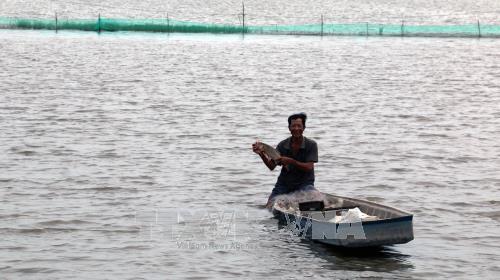 Lợi ích trong phát triển nuôi cá trên đồng ruộng mùa nước nổi