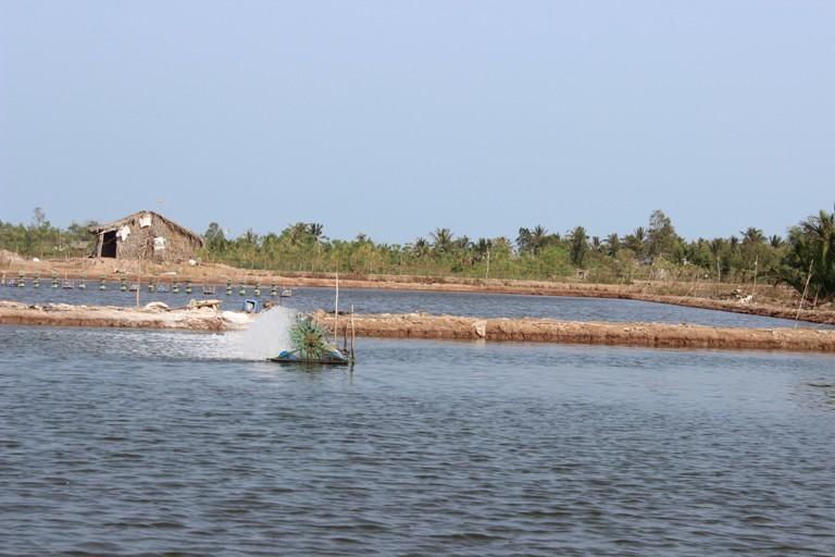 Phê duyệt Đề án khung phát triển sản phẩm quốc gia về tôm nước lợ
