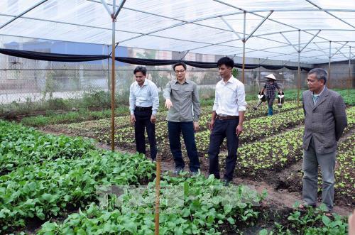 Phó Thủ tướng Vũ Đức Đam khảo sát mô hình sản xuất rau an toàn tại Hưng Yên