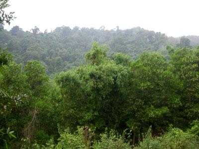 Vĩnh Phúc: Diễn tích rừng trồng mới 10 tháng năm 2017 vượt kế hoạch cả năm
