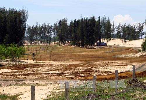 Phú Yên: Xử lý sai phạm trong việc chuyển mục đích sử dụng rừng và đất rừng