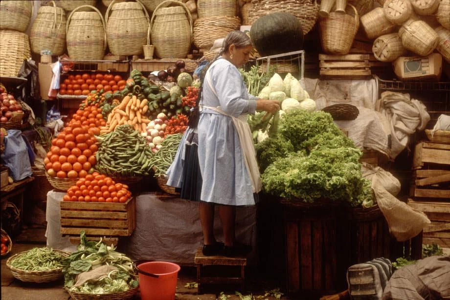 FAO: Các thành phố và chính sách địa phương là chìa khóa để chấm dứt lãng phí thực phẩm