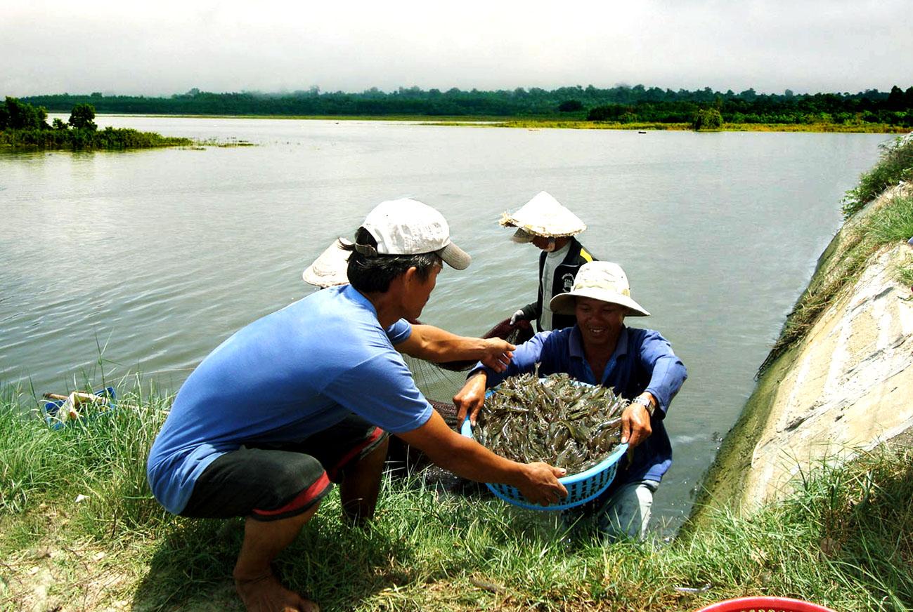 Vĩnh Phúc: Từng bước đa dạng hóa nuôi trồng thủy sản