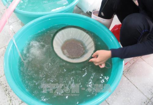 Ninh Thuận nâng cao chất lượng sản xuất tôm giống