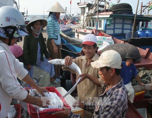Thừa Thiên - Huế: Tàu đánh bắt xa bờ phát huy hiệu quả