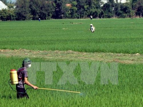 Nguy cơ tái bùng phát bệnh lùn sọc phương Nam hại lúa