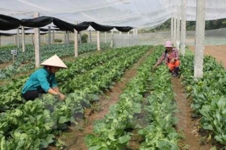 Đẩy mạnh liên kết sản xuất và tiêu thụ sản phẩm nông nghiệp