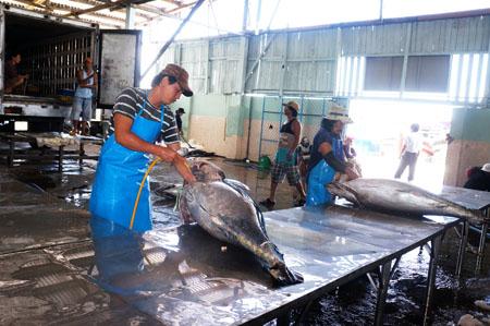 Xuất khẩu cá ngừ tăng trưởng mạnh