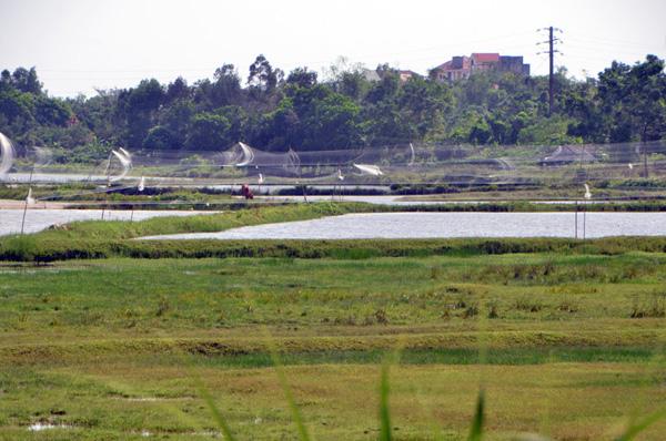 Quảng Ninh:Tăng cường công tác bảo vệ chim di cư