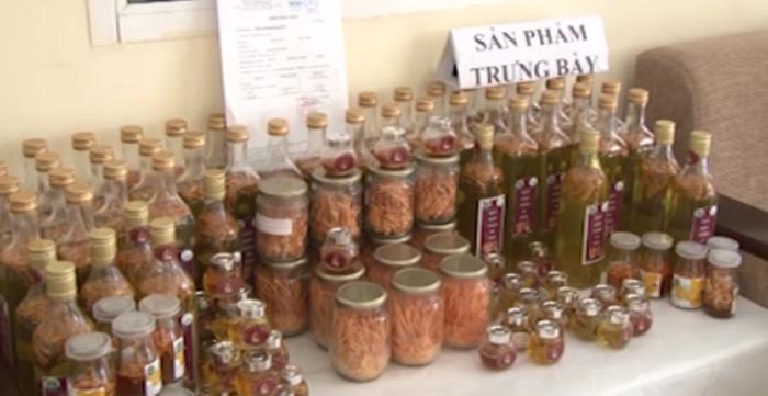 Trường ĐH Tây Bắc nuôi trồng thử nghiệm Đông trùng hạ thảo