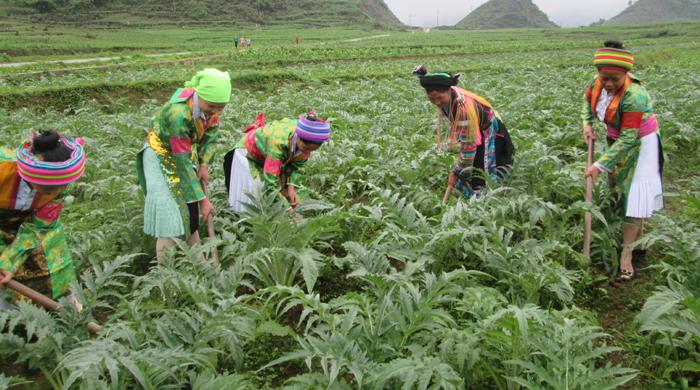 Hà Giang tăng cường các giải pháp vươn lên thoát nghèo bền vững