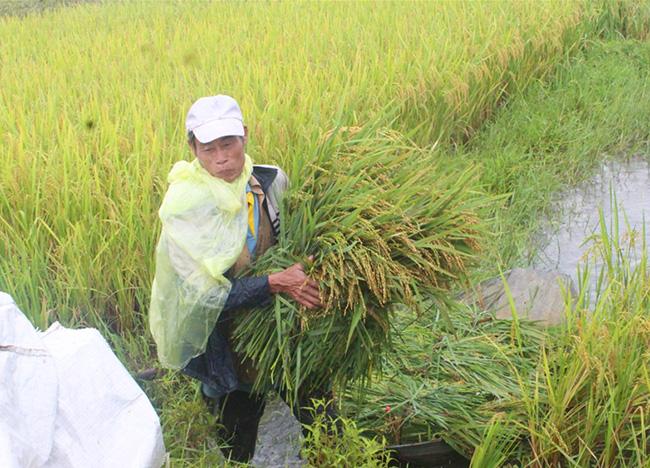 Mưa lũ gây nhiều thiệt hại tới sản xuất nông nghiệp trong tháng 10