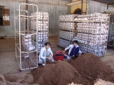 Bình Dương: Nâng cao chất lượng đào tạo nghề cho lao động nông thôn