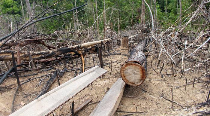 Quảng Nam: Kỷ luật tập thể, cá nhân liên quan các vụ phá rừng ở Tiên Lãnh