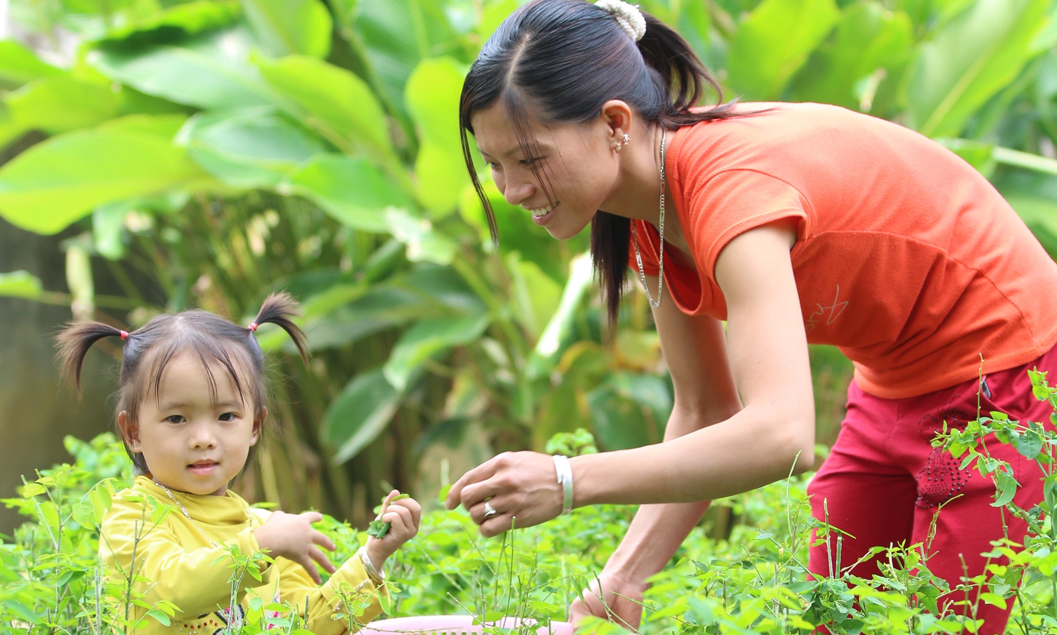 Nhân rộng mô hình tăng cường an ninh lương thực hộ gia đình tại Hòa Bình và Lai Châu