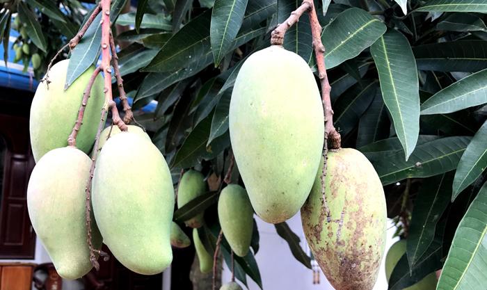 Trái cây nhiệt đới tăng cơ hội cho các nước đang phát triển