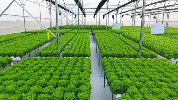 Sản xuất nông nghiệp công nghệ cao theo hướng phát triển bền vững