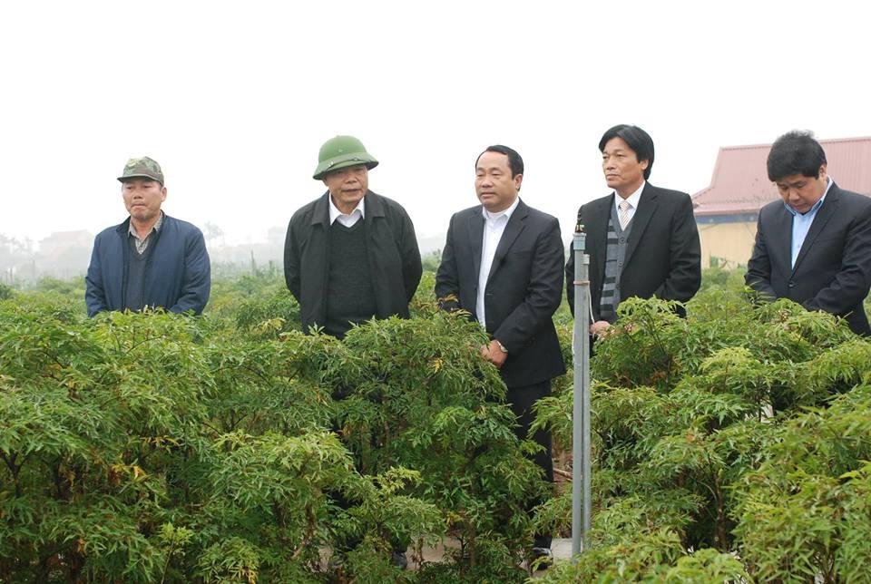 Xây dựng huyện Hải Hậu (Nam Định) thành huyện nông thôn kiểu mẫu