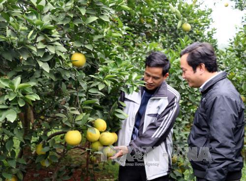 Nghệ An: Nhiều sản phẩm nông nghiệp được dán tem truy xuất nguồn gốc