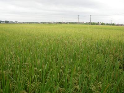 Vĩnh Phúc đã thu hoạch xong lúa và cây hàng năm khác vụ mùa