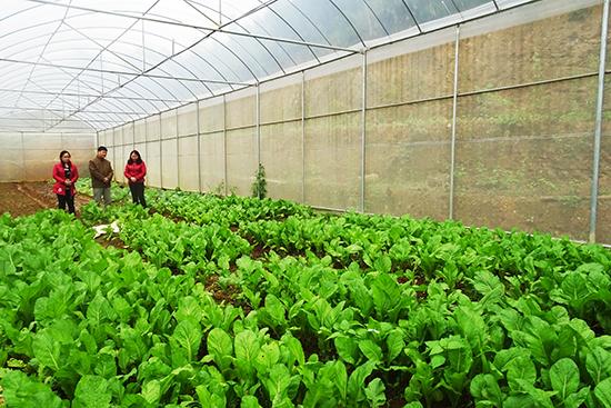 Bắc Giang đẩy mạnh ứng dụng khoa học công nghệ vào sản xuất nông nghiệp