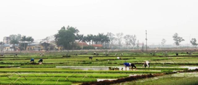Năm 2017, sản xuất nông nghiệp gặp khó do thời tiết bất thường