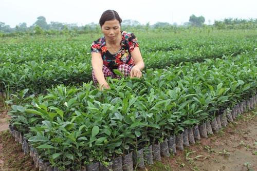 Tăng cường công tác đào tạo nghề nông nghiệp cho lao động nông thôn