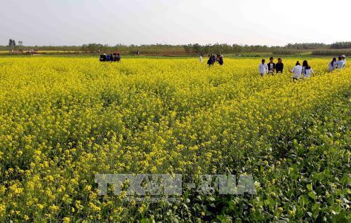 Mô hình mới cho phát triển nông nghiệp tại Thái Bình
