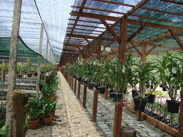 Đồng Nai hình thành nền sản xuất nông nghiệp công nghệ cao