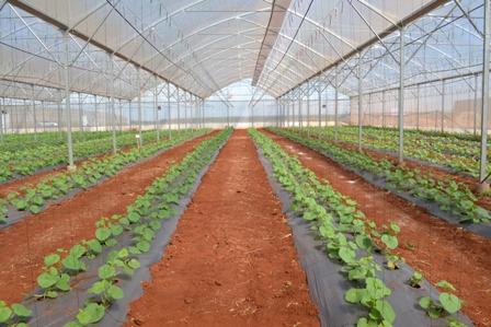 Cần Thơ đẩy mạnh phát triển nông nghiệp đô thị công nghệ cao