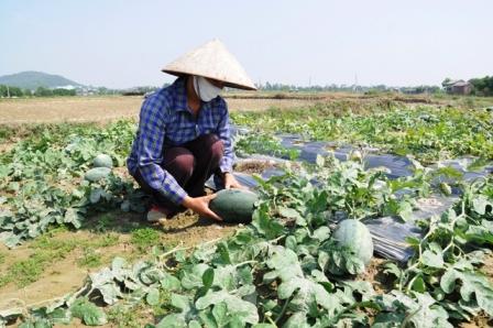 Cơ hội xúc tiến giao thương cho nông sản Vĩnh Phúc