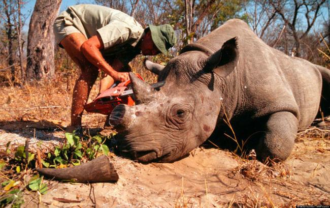 Hợp tác ngăn chặn nạn săn bắt trái phép và buôn bán động vật hoang dã ở Đông Phi
