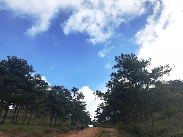 Công tác bảo vệ, phóng chống cháy rừng được quan tâm