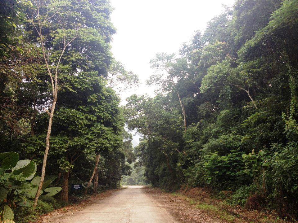 Vĩnh Phúc: Tăng cường phòng chống cháy rừng