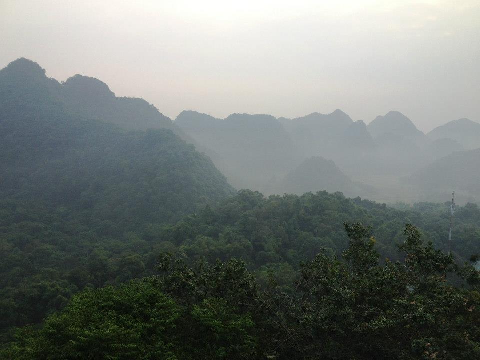 Vĩnh Phúc: diện tích rừng trồng mới tập trung tăng 10,17% trong 11 tháng/2017
