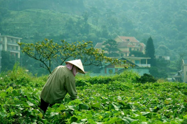 Tạo chuyển biến mạnh mẽ cho ngành sản xuất rau, củ, quả