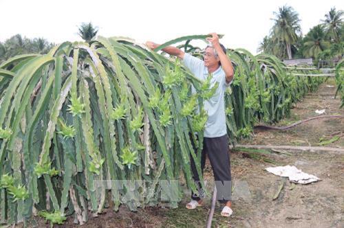 Hiệu quả kinh tế cao từ phát triển cây trồng phù hợp
