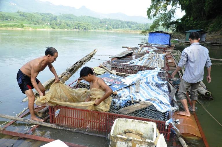 Vĩnh Phúc: Thúc đẩy các giải pháp phát triển ngành thủy sản