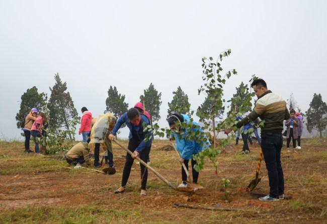 Chuẩn bị Tết trồng cây Xuân Mậu Tuất 2018
