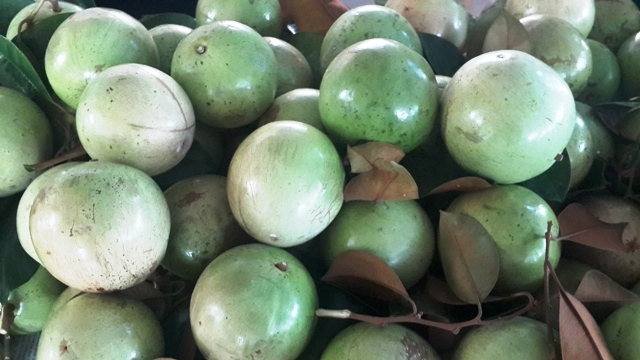Tăng cường các giải pháp thúc đẩy phát triển sản xuất, xuất khẩu trái cây