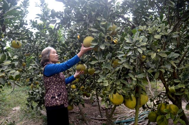 Quảng Ninh: Đẩy mạnh công tác giảm nghèo
