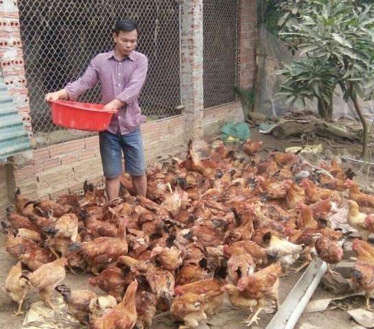 Hòa Bình tập trung phát triển chăn nuôi theo hướng bền vững