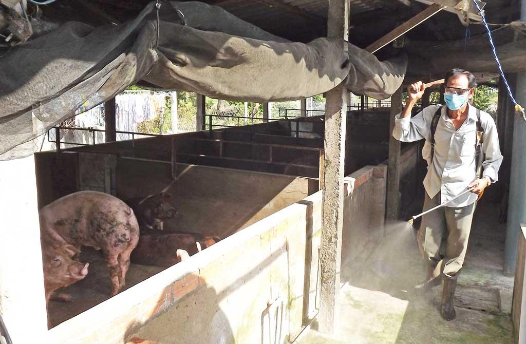 Tăng cường phòng chống dịch bệnh trên đàn gia súc, gia cầm trong dịp Tết